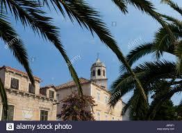 palm trees and st nicholas church in cavtat croatia stock photo
