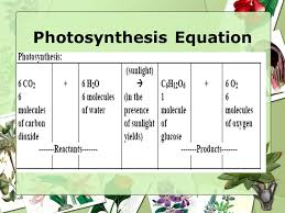 photosynthesis grade 7th anderson ppt video online download