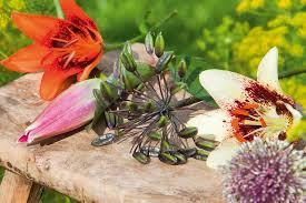 June Flowers - june flower world love flowers