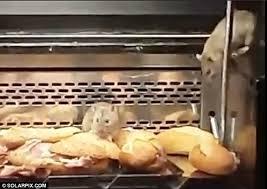 rat cuisine rat barfblog