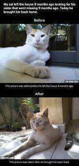 Missing Cat Meme - this missing cat cute cats pinterest cat animal and kitten
