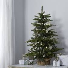 modern design 3 ft christmas tree premium grade mail order fraser
