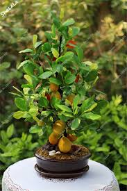 Indore Plants Compare Prices On Mini Garden Plants Online Shopping Buy Low