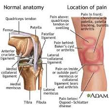 Lateral Patellar Ligament Best 25 Acl Ligament Ideas Only On Pinterest Ligament Tear In