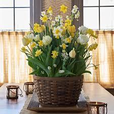all houseplants white flower farm