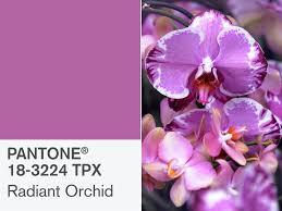 pink pantone pantone u0027s radiant orchid is 2014 u0027s color of the year