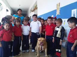 american stanford terrier y american pitbull terrier image045 jpg