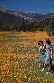 Botanic Garden Santa Barbara Image Of Two In The Meadow Surrounded By Poppies