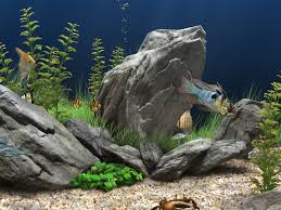 view in gallery tropical aquarium designs offer plenty of color