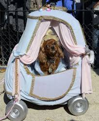 pets dress up for halloween gagdaily news
