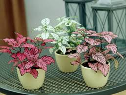 indoor plant 10 cute small indoor plants small houseplants balcony garden web