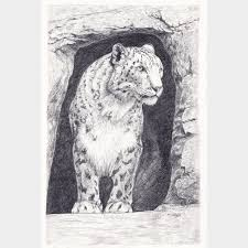 snow leopard in cave original pencil drawing folksy