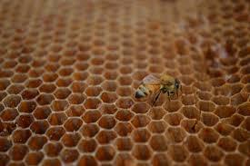 backyard beekeeping bee ing considered in cedar rapids u2013 homegrown