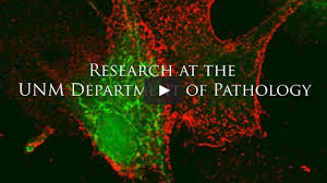 Association Of Pathology Chairs The University Of New Mexico Department Of Pathology The