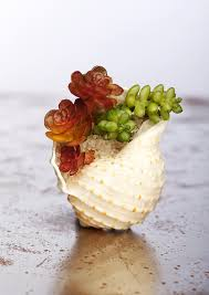 Small Desk Plants by This Beautiful Mini Garden In A Seashell More Planters And