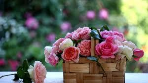 Flower Gardens Wallpapers - flower grass flowers garden wallpaper flower full hd hd 16 9 high