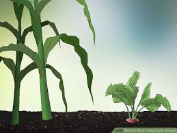 how to plan a vegetable garden with pictures wikihow
