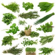 herbes cuisine fines herbes cuisine fleur de
