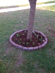 What Kind Of Mulch For Vegetable Garden by Planting Under Trees U2013 What Plants Or Flowers Grow Well Under A Tree