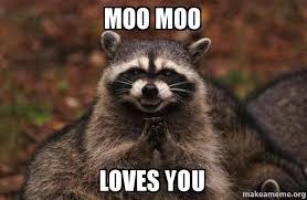 Moo Meme - moo moo loves you evil plotting raccoon make a meme