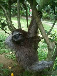 Sexy Sloth Meme - strippersloth a place for sloth strippers