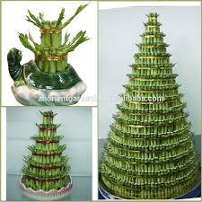 80 best lucky bamboo images on lucky bamboo bamboo