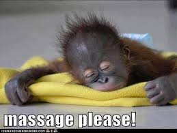 Funny Massage Memes - animal capshunz massage funny animal pictures with captions
