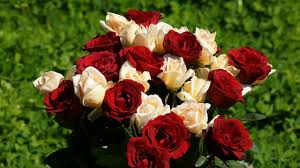 Different Color Roses What One To 10 Roses Mean Which Color Of Roses To Use For