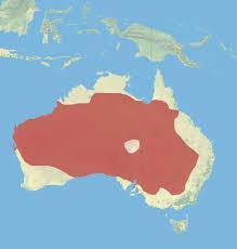 Dove Migration Map Red Kangaroo Animal Distribution Maps Pinterest Red Kangaroo
