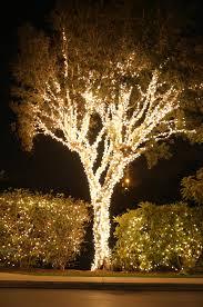 tree trunk lights rainforest islands ferry