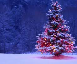 merry christmas mistletoe illustration desktop wallpaper