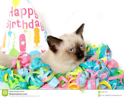 cute kitten and birthday party decorations royalty free stock