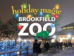 brookfield zoo winter lights best holiday lights in chicago cbs chicago
