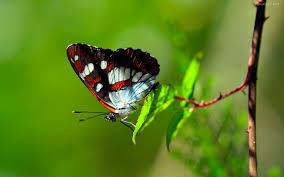 imagenes lindas naturaleza disfrutar imágenes de la naturaleza espectaculares frases cortas