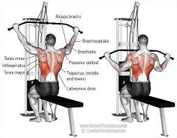 reverse grip lat pull down exercise back exercises pinterest