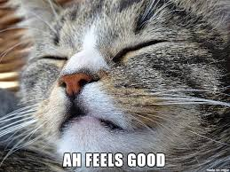 Good Cat Meme - my cat has a feels good expression on her face all the time so here