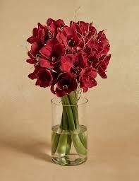 christmas flowers u0026 plants flowers u0026 plants gifts m u0026s