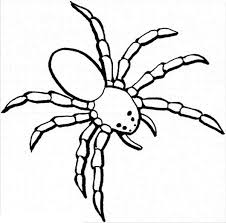 Spider Color Pages Spider Coloring Pages For Kids Coloringstar by Spider Color Pages