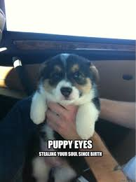 Puppy Eyes Meme - puppy eyes stealing your soul since birth puppy quickmeme