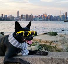 the coolest dog in the world is named apollo and he lives in