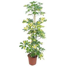 Types Of Garden Trees How To Identify Good Quality Of Gardening Supplies Rooftop Powder