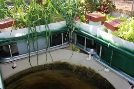 backyard aquaponics sharingame picture on fascinating backyard