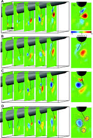 undulating fins produce off axis thrust and flow structures