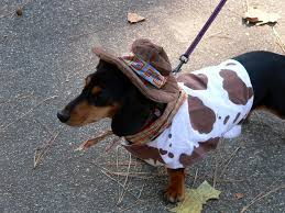 Halloween Costumes Miniature Dachshunds Dog Owners Dog Halloween Costumes Kids