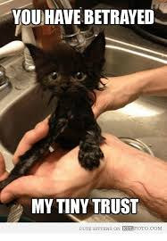 Kittens Memes - 25 best memes about cute kittens cute kittens memes