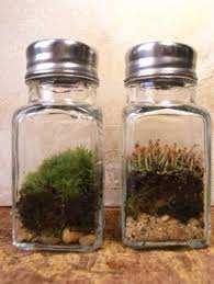 genius substitute for pricey cloches terrariums pinterest