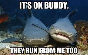 Shark Meme - 11 funny shark memes to celebrate shark week
