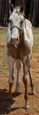 61 best horse color ref paint pinto images on pinterest paint