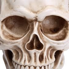 Halloween Skeletons Life Size by Readaeer Life Size Replica Realistic Human Skull Head Bone Model