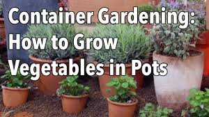 Vegetable Container Gardening Guide by Container Gardening Top Tips For Success Youtube